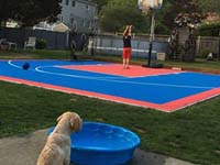Young dog in foreground watching kids play basketball on small blue and orange court in Beverly, MA.
